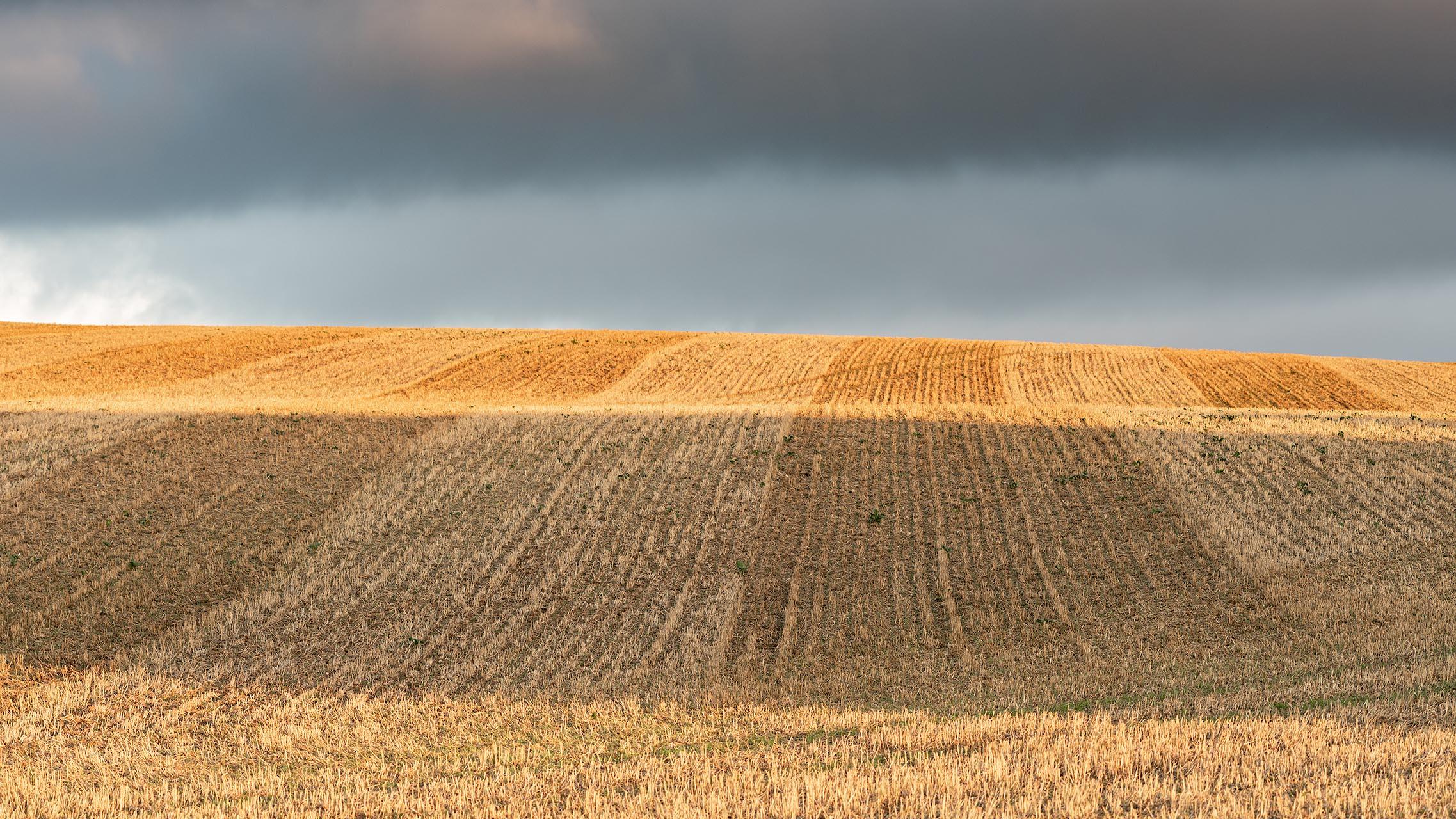 Op Møn staan in het glooiende landschap enorme graanvelden aan de rand van de zee