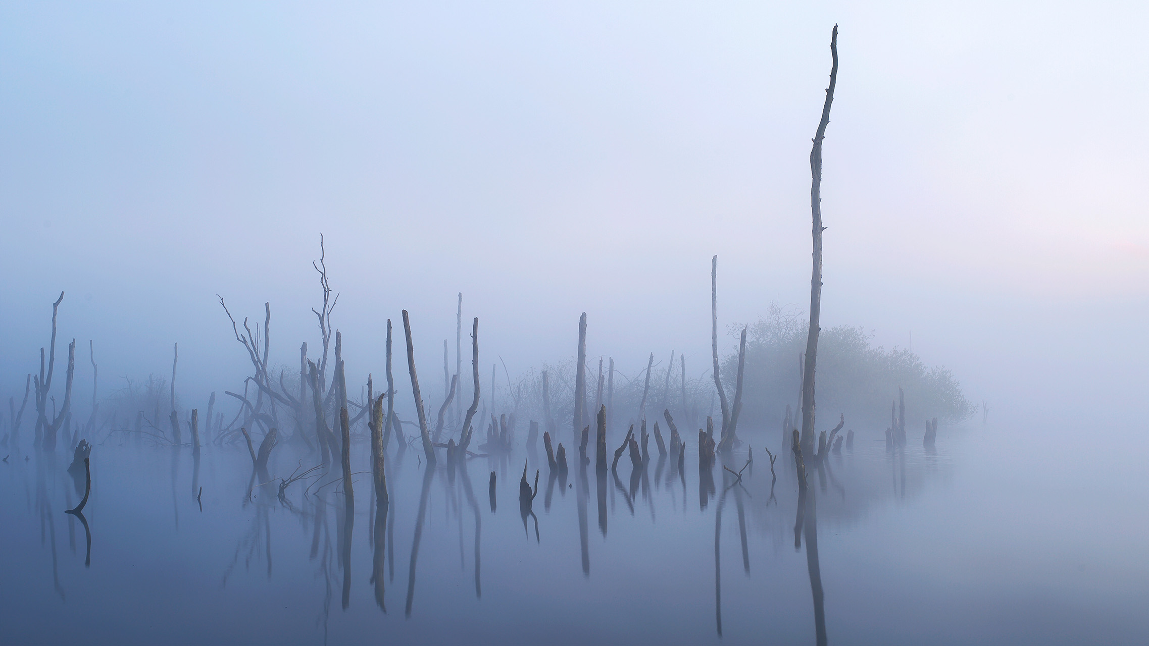 Timing is alles voor fotografen die bijzondere foto's willen maken. Mist geeft vaak een mystieke sfeer.