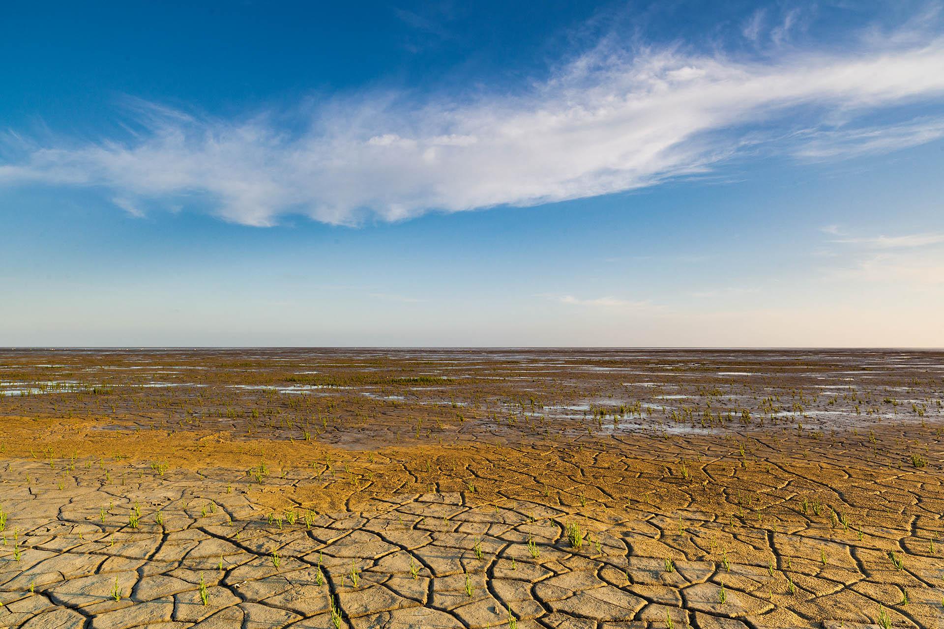 Door de droogte ontstaan krimscheuren in het slik op het Wad.