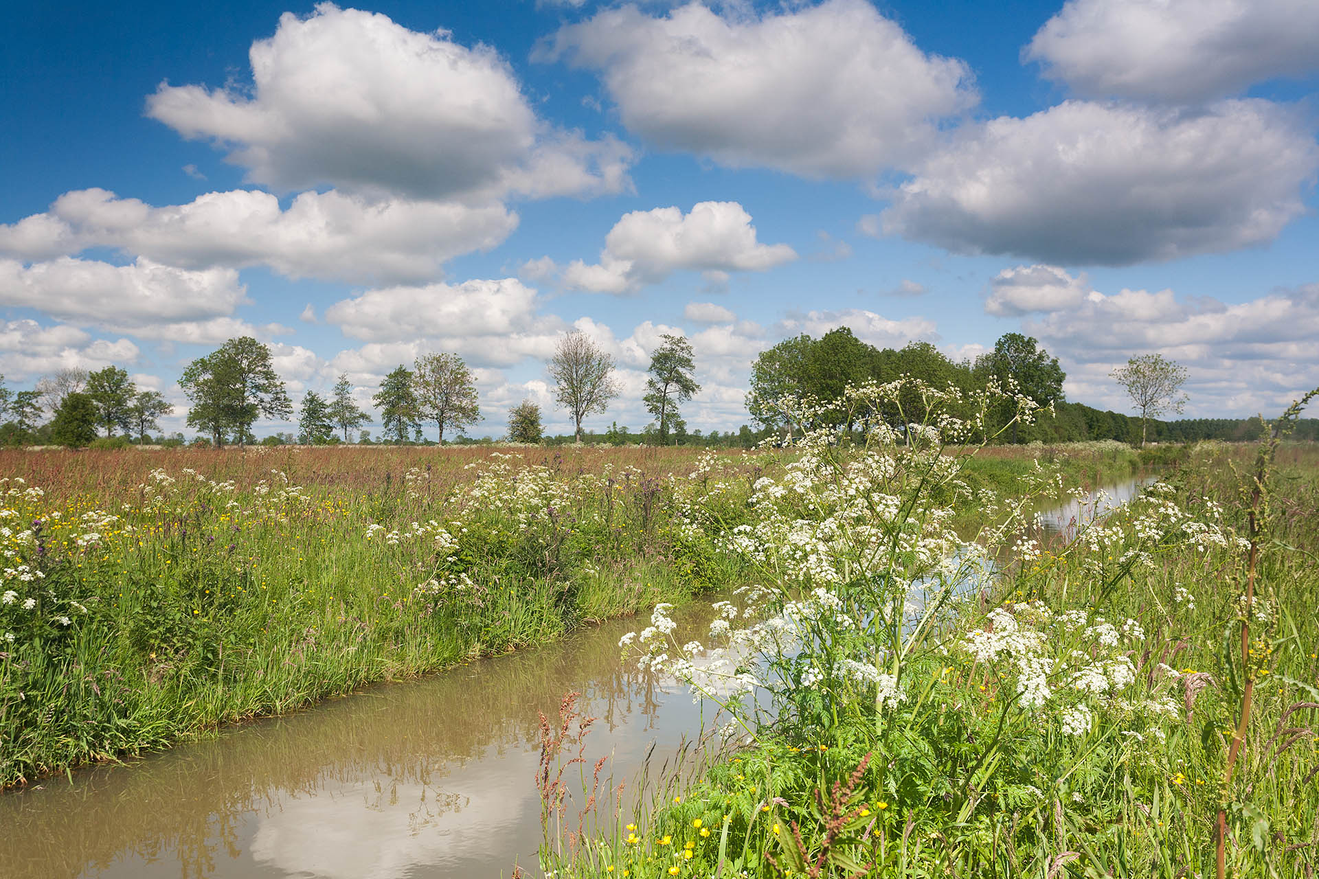 Voorjaar met fluitenkruid in het Groninger landschap