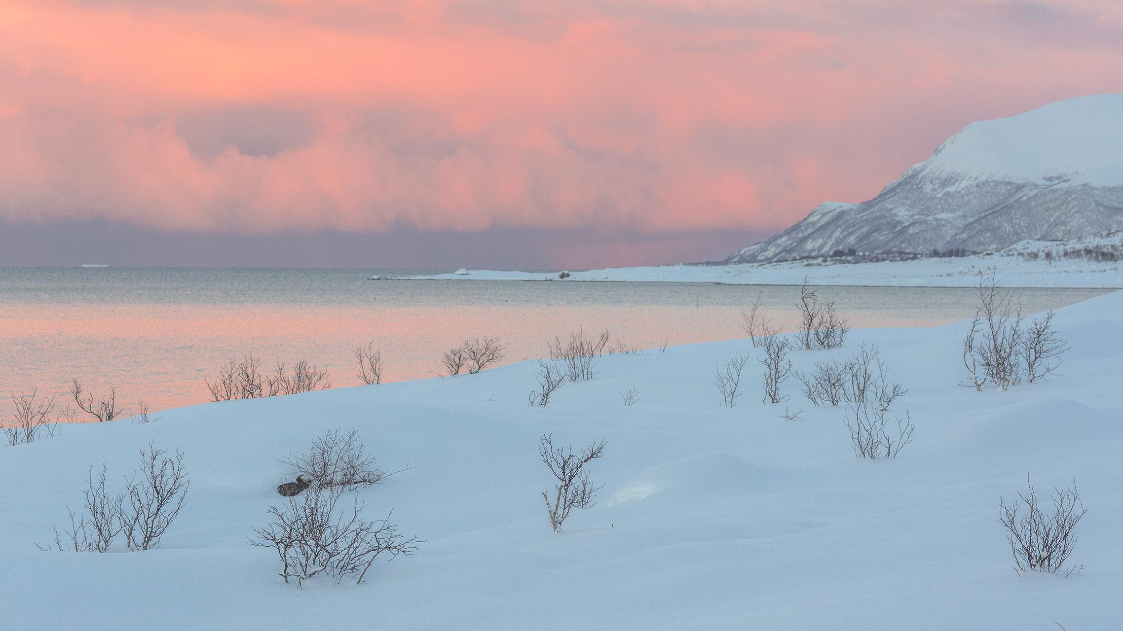 Zachte tintenboven een fjord op de Vesteralen in Noorwegen